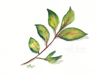 Leaf - Christine A. Carter